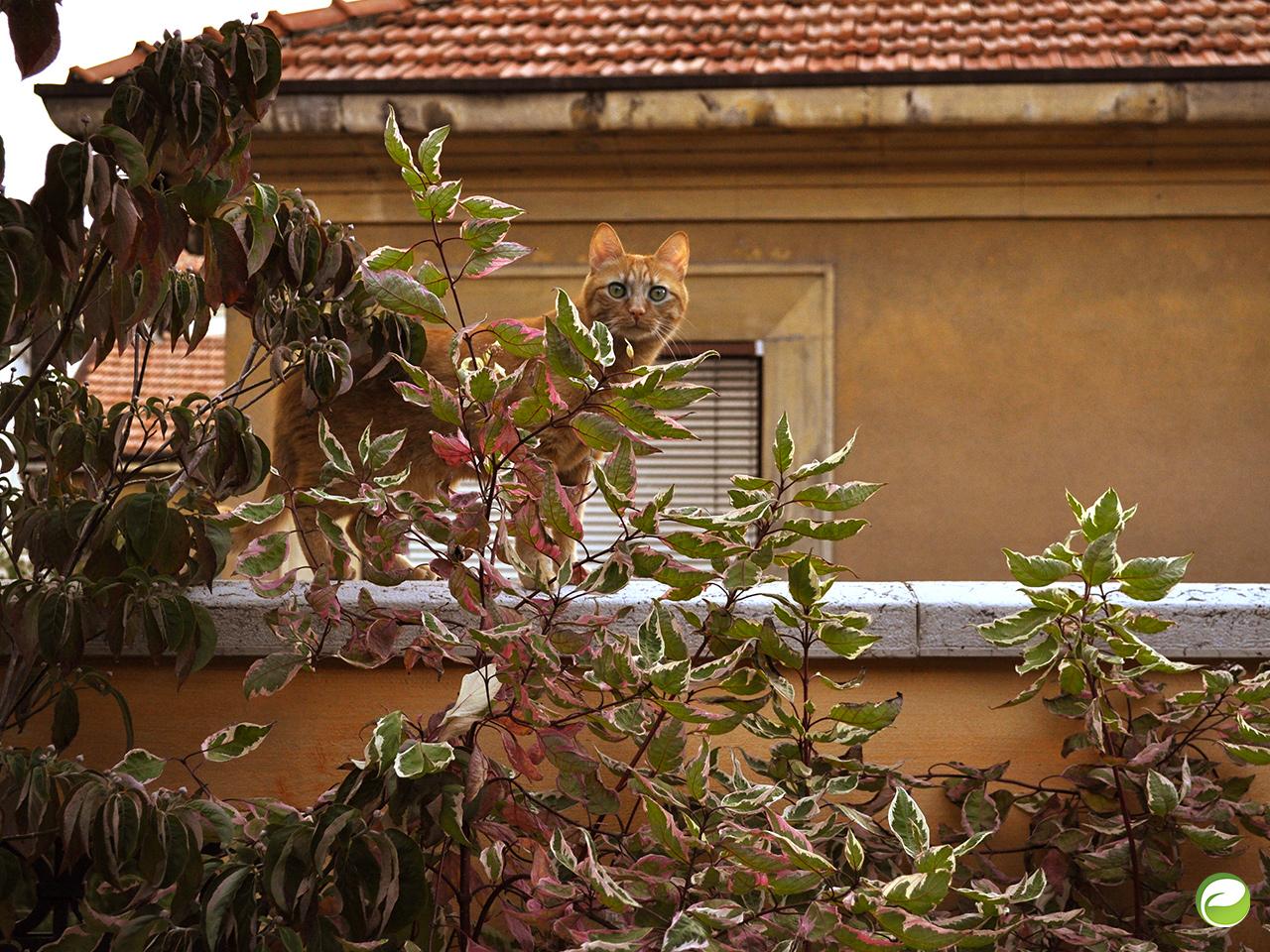 Portfolio_Loft vubo_PierlucaTondo